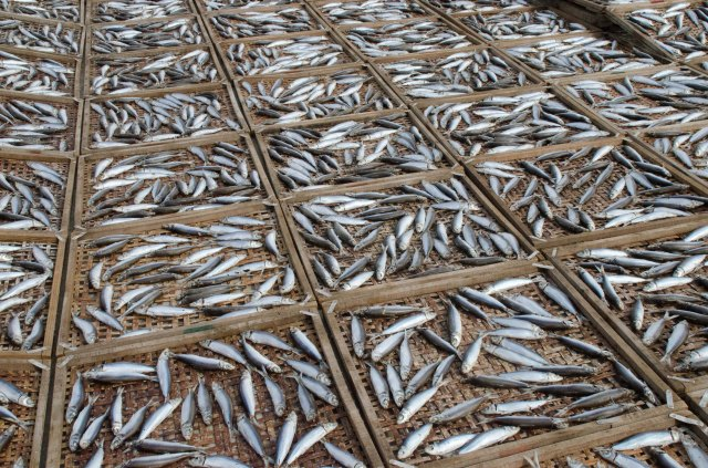 Sun-dry fishes