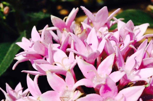 Flower0614--
