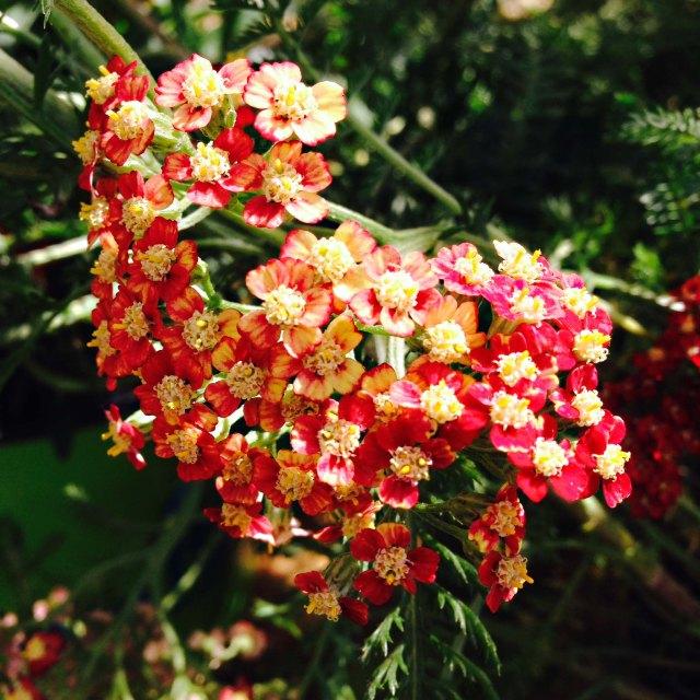 flower06141