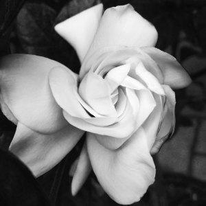 flower2ss