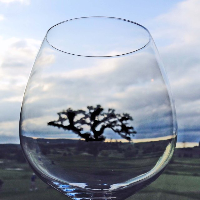 Tree in wine glass