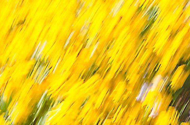 yellowFlower1s