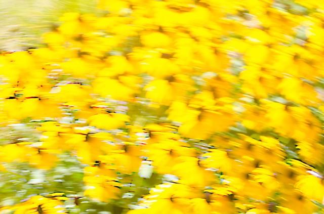 yellowFlower2s