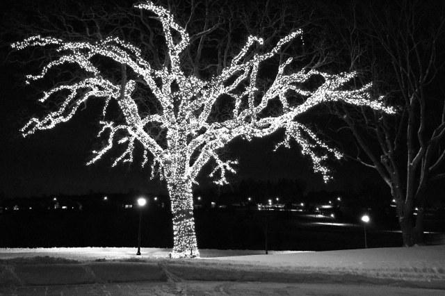 bright tree at Somerby Golf Club