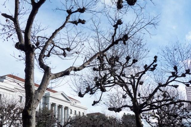tree1s