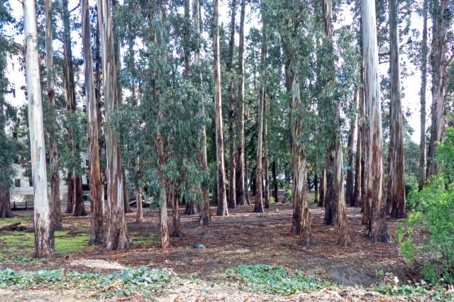 tree3s