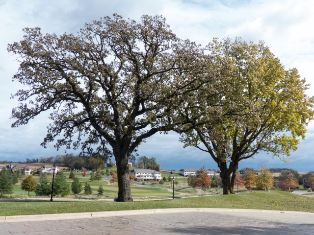 tree4s