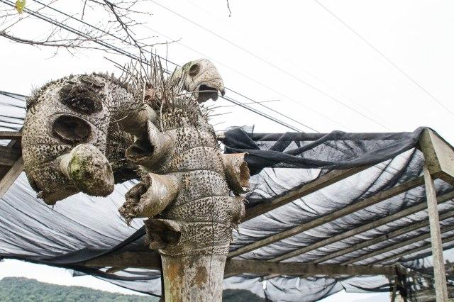 dead tree3