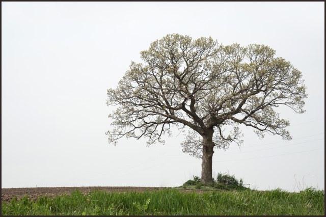 tree2s